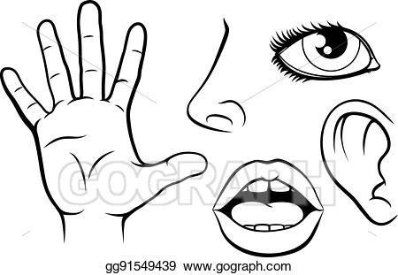 5 senses clipart black and white. Vector stock five illustration
