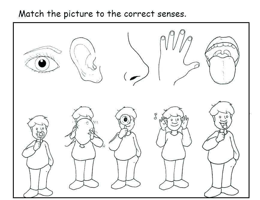 5 senses clipart black and white. The five coloring pages