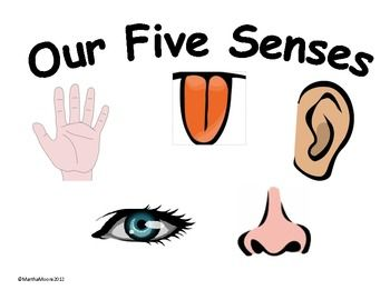5 senses clipart cartoon #16657731