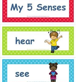 Five vocabulary cards sight. 5 senses clipart children's