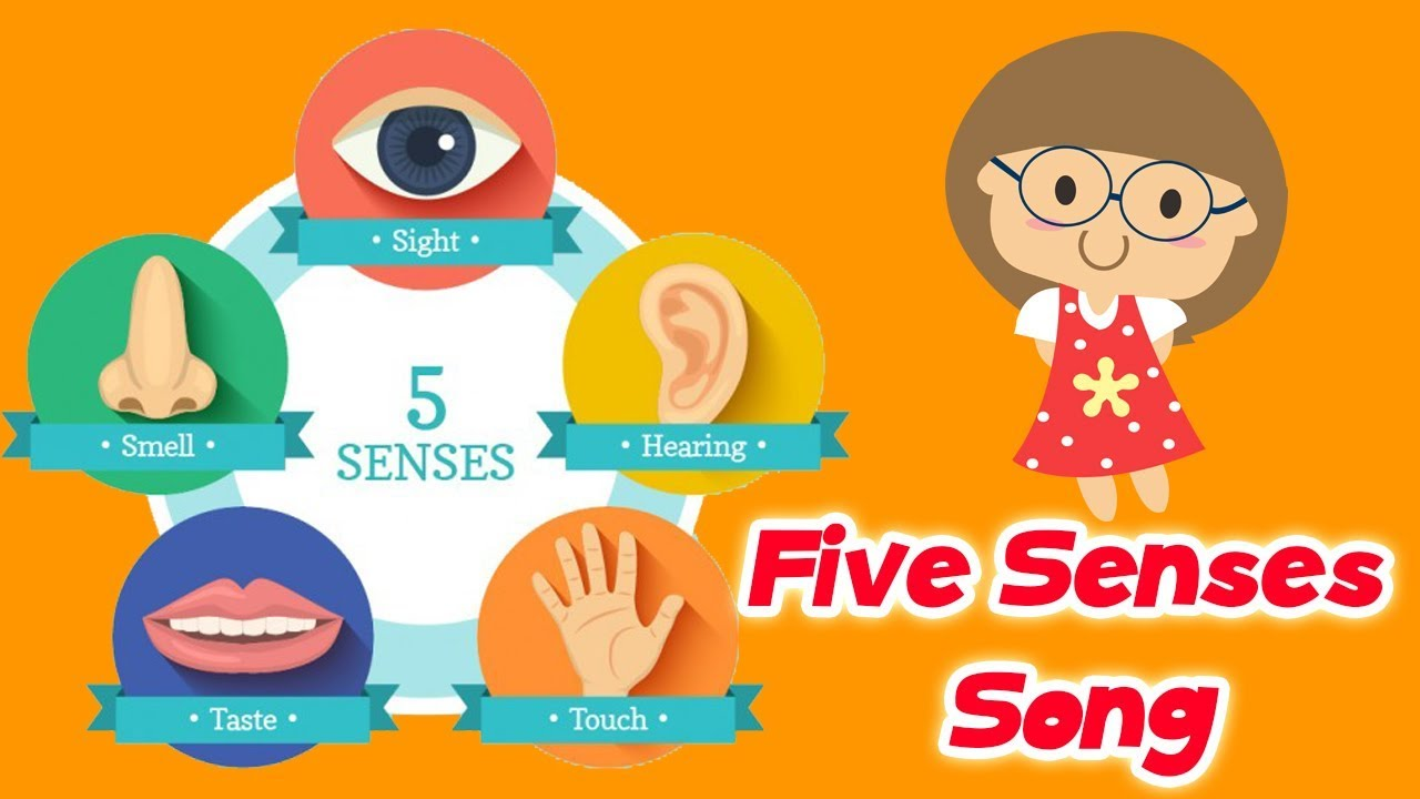 5 senses clipart children's. The five song for