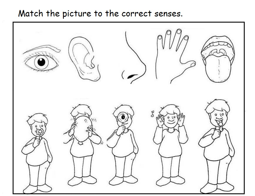 5 Senses Clipart Coloring Page, 5 Senses Coloring Page Transparent FREE For  Download On WebStockReview 2021