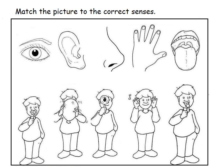 5 senses clipart coloring page.  pages democraciaejustica five