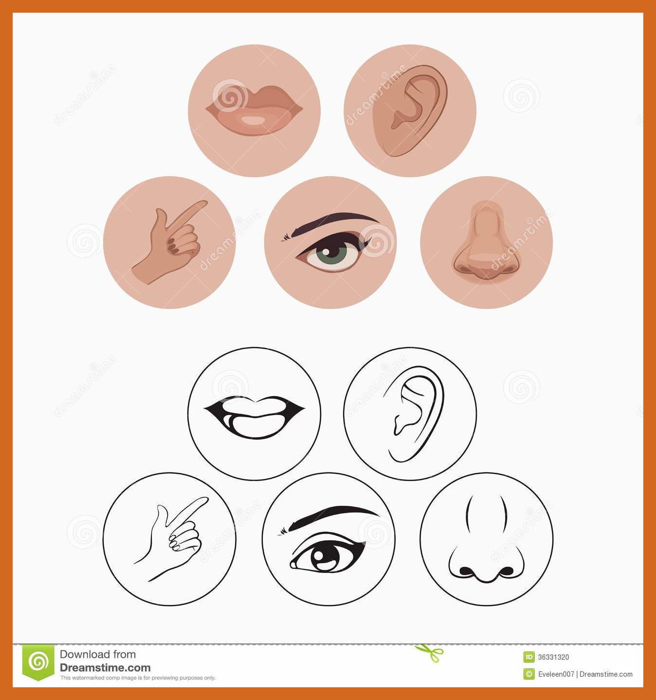 Astonishing five thinglink pics. 5 senses clipart cute
