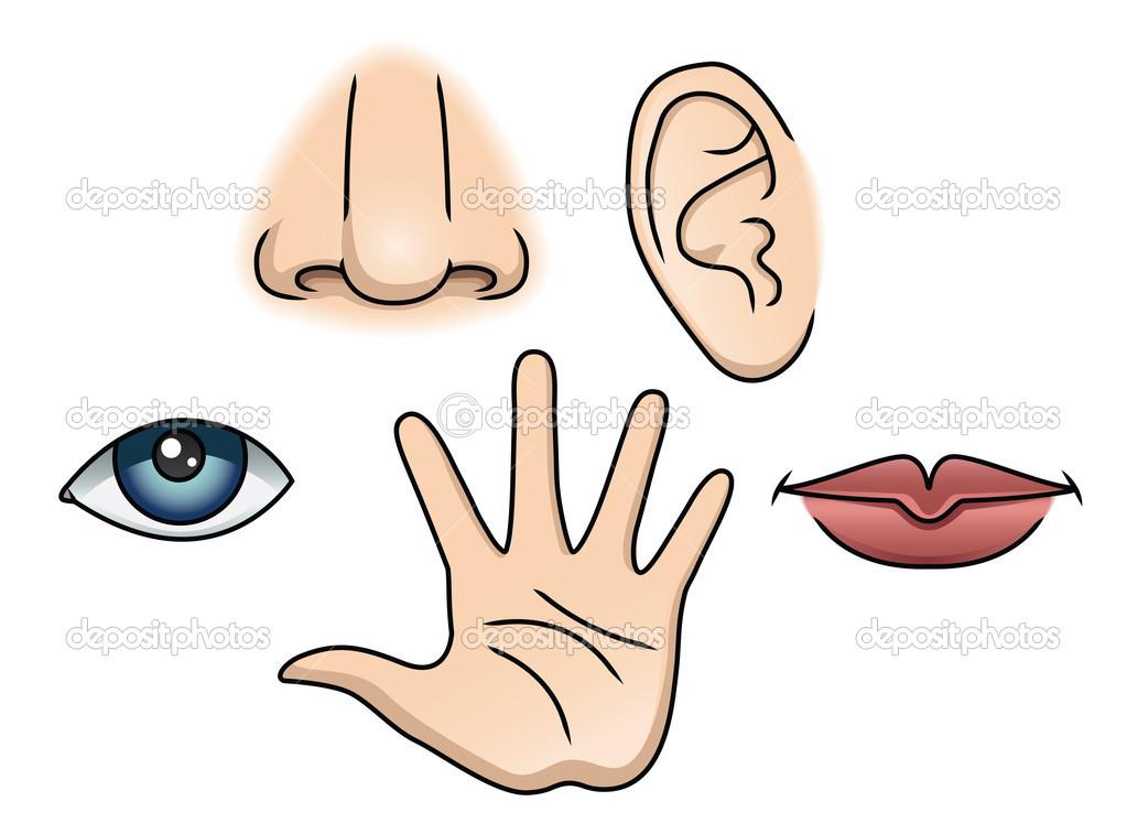 5 senses clipart cute. Fun