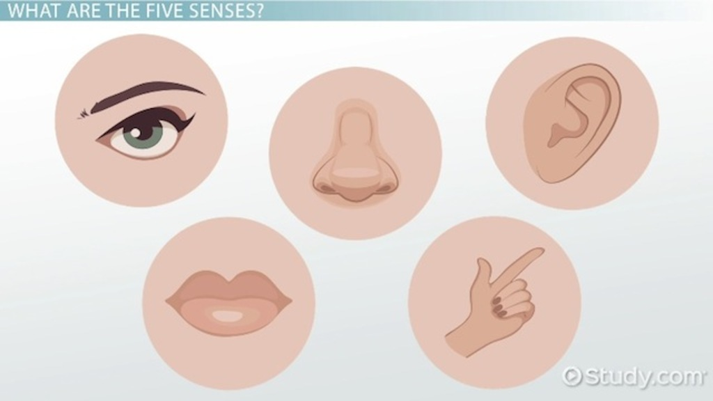 The five their functions. 5 senses clipart face