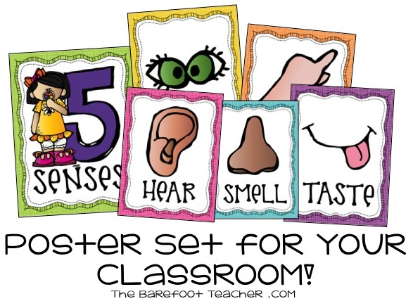 Science Interactive Notebooks The Five Senses