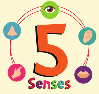 5 Senses Clipart Five Senses 5 Senses Five Senses