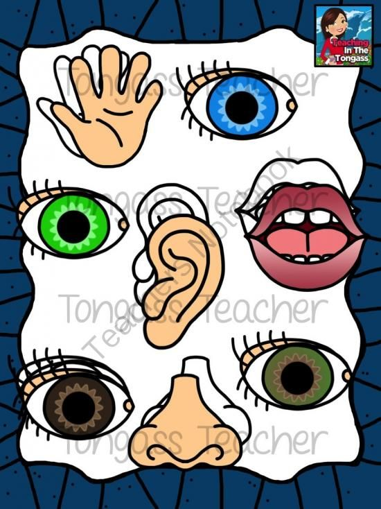 Five from tongassteacher on. 5 senses clipart hand