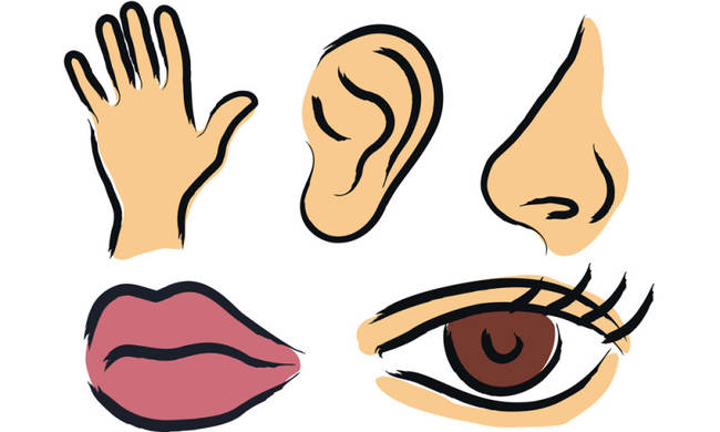 Facts about the body. 5 senses clipart human