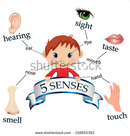 Kinesiology sport review how. 5 senses clipart imagery