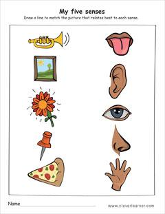 The five senses worksheets for preschools