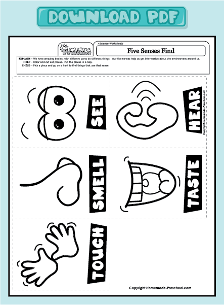 Five sense worksheet new. 5 senses clipart pdf