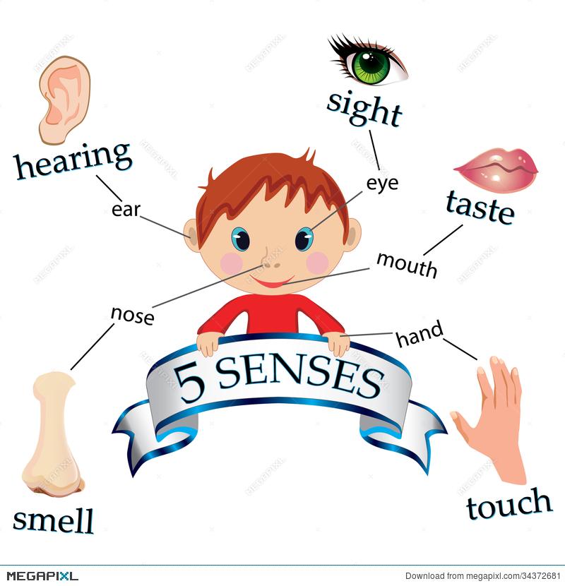illustration megapixl. 5 senses clipart preschool