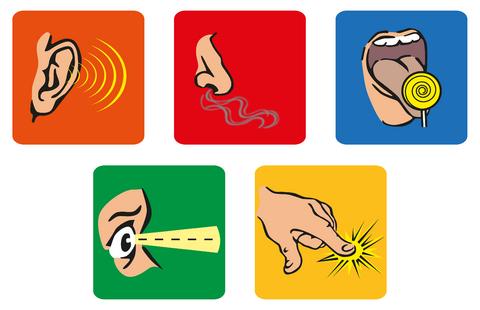 Explained for children hearing. 5 senses clipart project