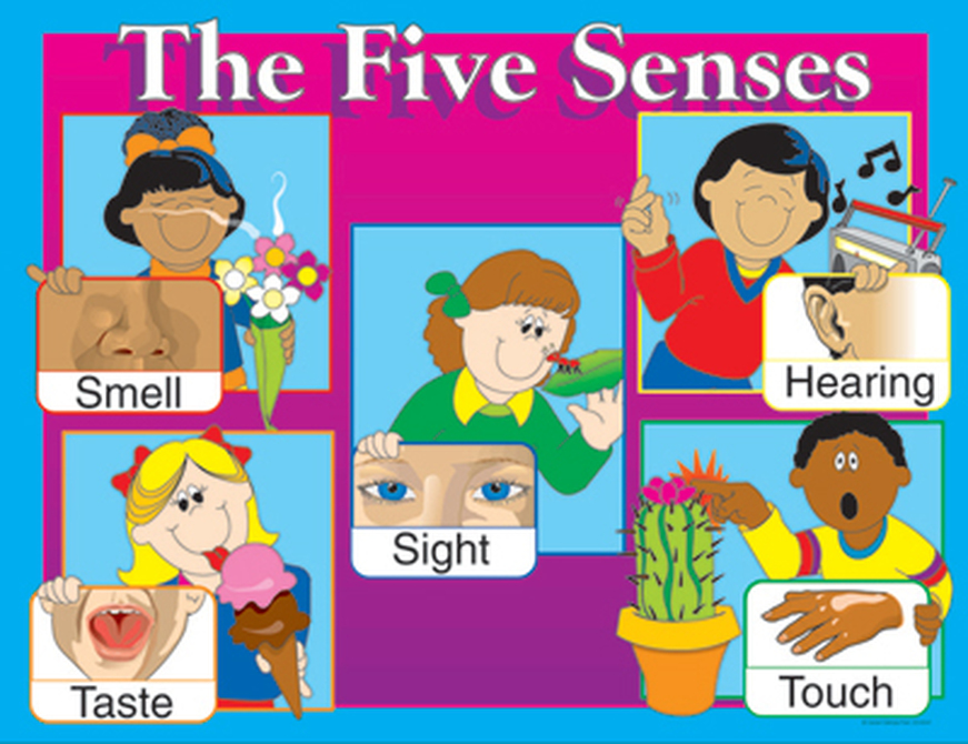 5 senses clipart project. Introduction the five have