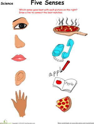 5 senses clipart project. The worksheets free printables