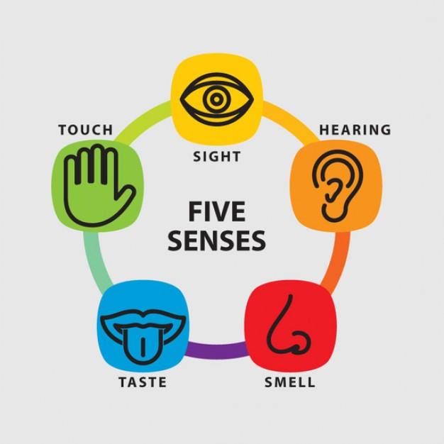 Copy Of Five Senses