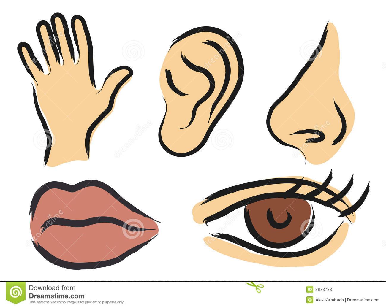 Organs png transparent images. 5 senses clipart sense organ