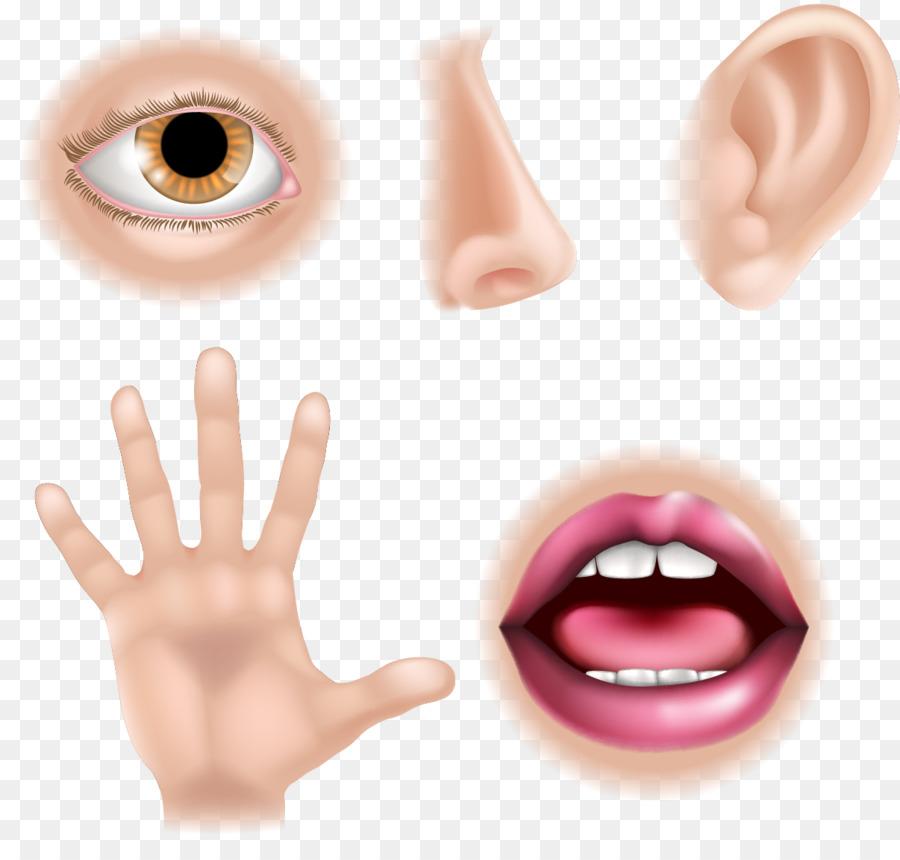 5 senses clipart sense organ. The five human body