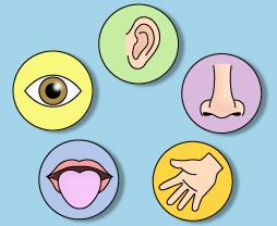 5 senses clipart sense organ. Organs png transparent images
