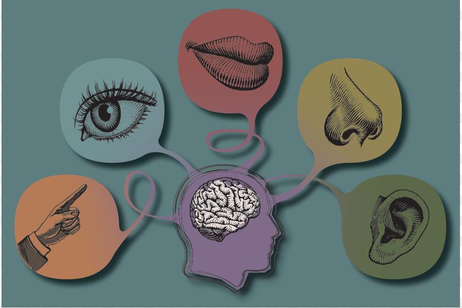 5 senses clipart sense perception. The five world taste