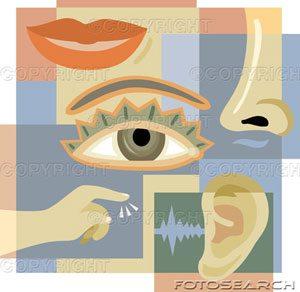 The . 5 senses clipart sense perception