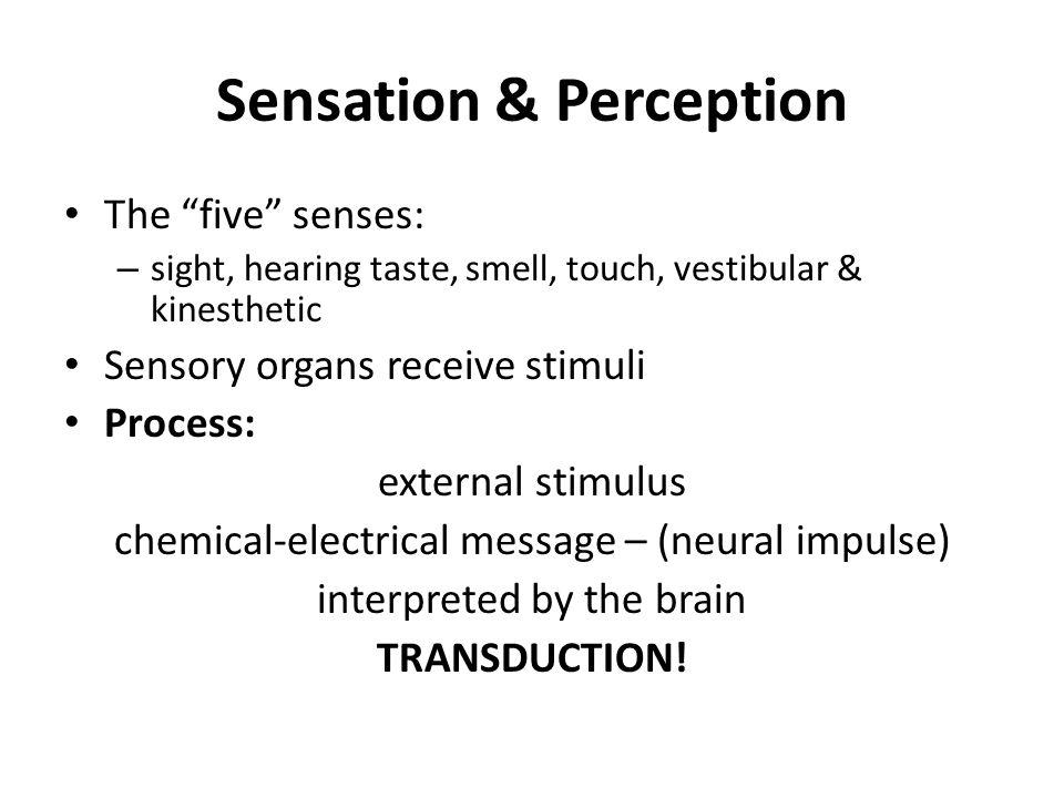 Sensation chapter the five. 5 senses clipart sense perception