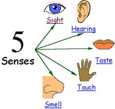 collection of details. 5 senses clipart sensory detail