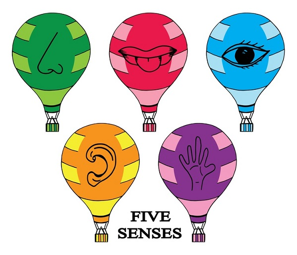 5 senses clipart sensory detail. How to use the