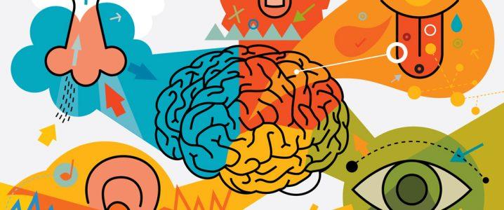 Multi branding experience designmantic. 5 senses clipart sensory marketing