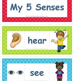 5 senses clipart sight. Five vocabulary cards hearing
