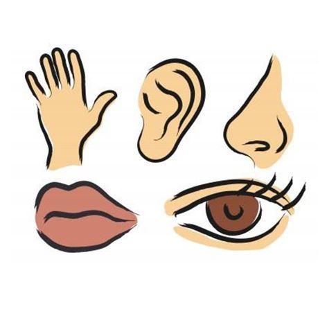 5 senses clipart sixth sense. The five present six