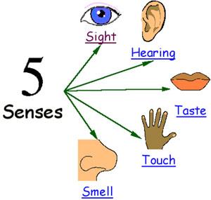 Early literacy connection exploring. 5 senses clipart sixth sense