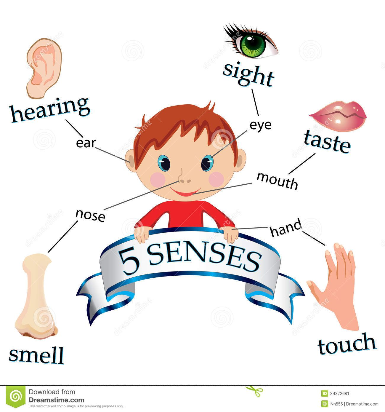 5 senses clipart toddler. Image of kids five