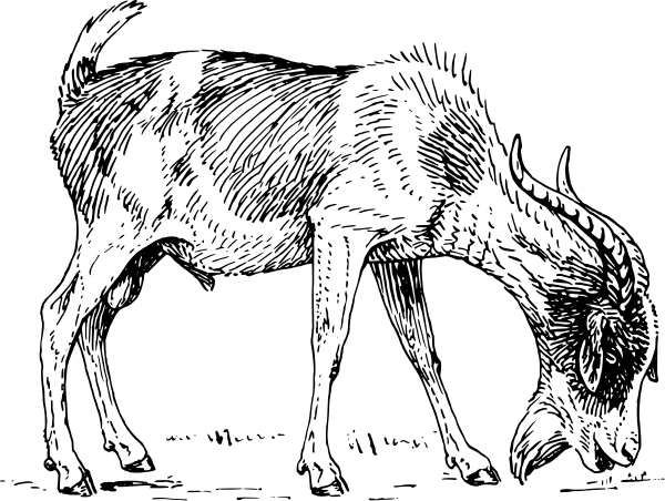 Free buck clip art. 7 clipart goat
