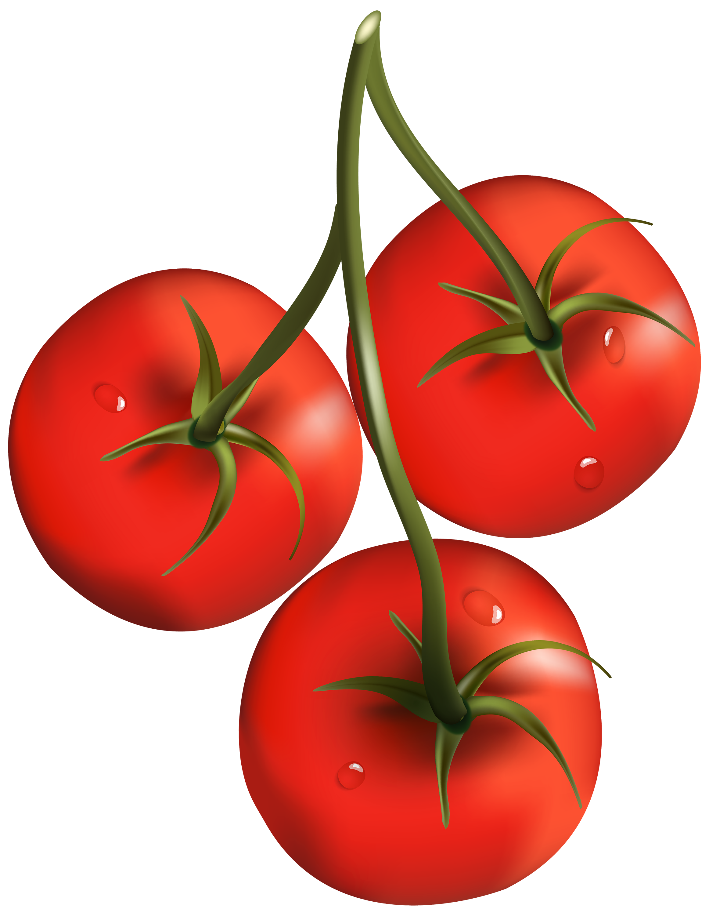 Tomatoes clipart anaar. Tomato png images free