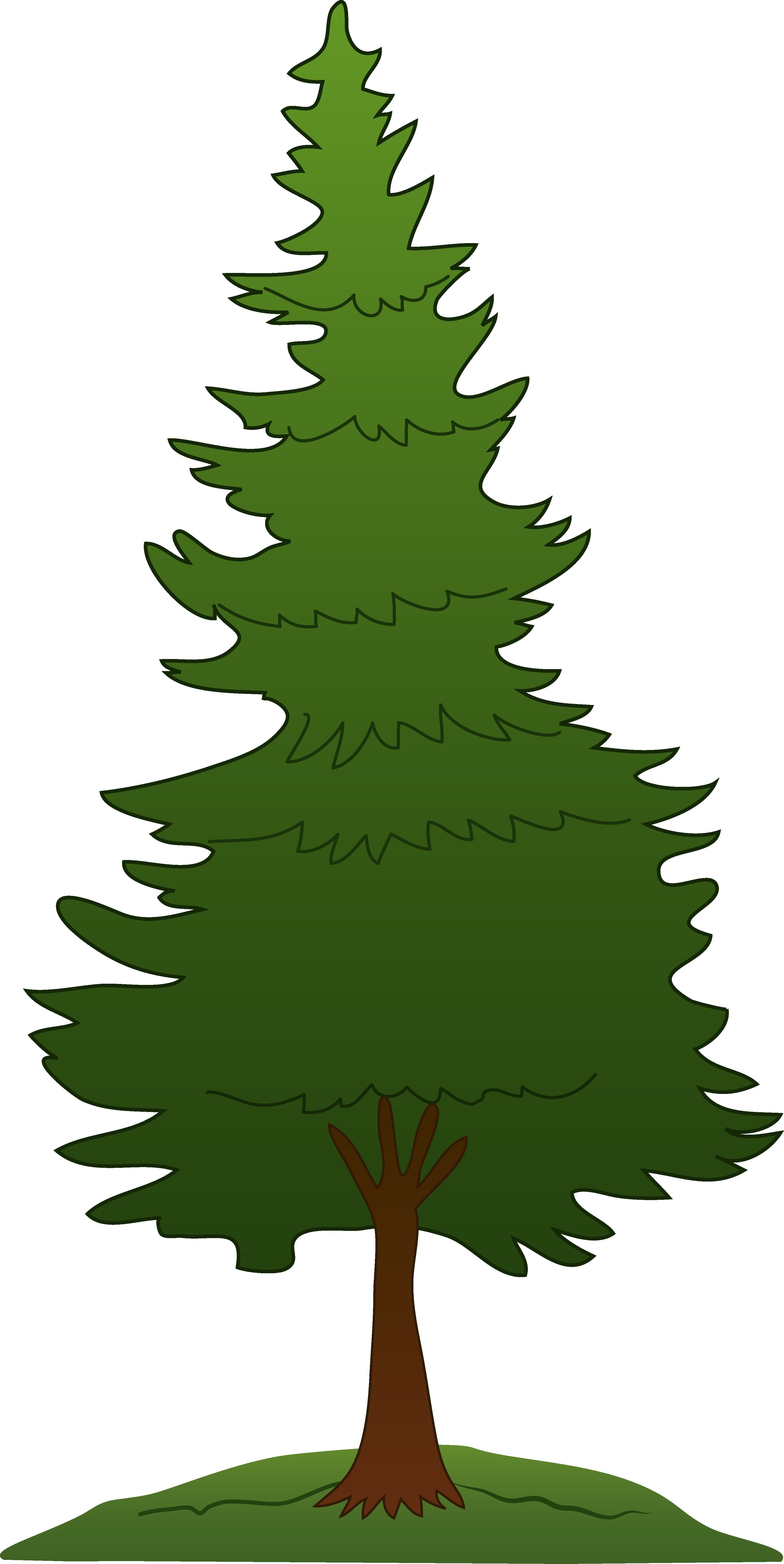 Pine panda free images. Picture clipart tree