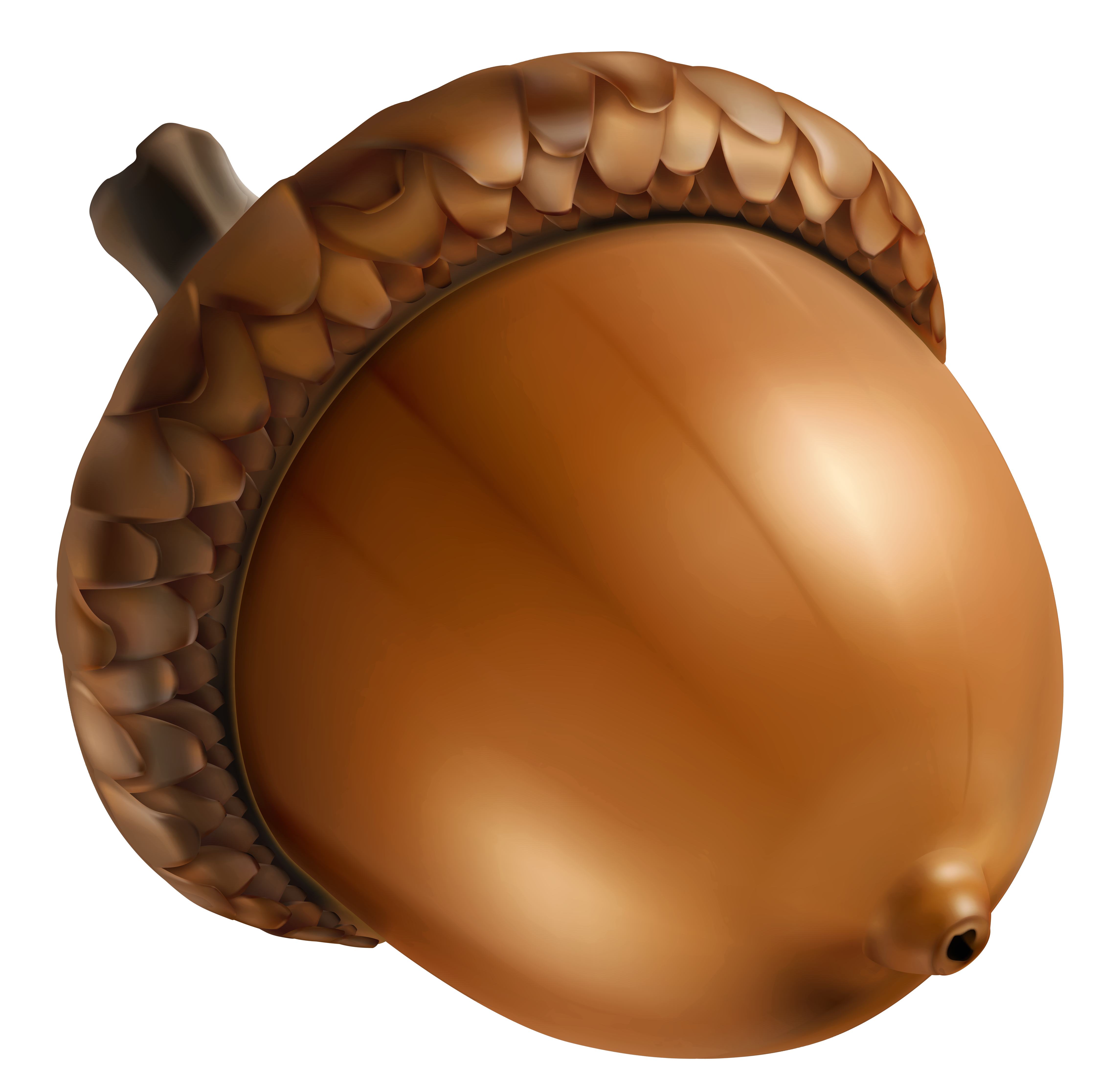 Acorn png image gallery. Nut clipart acron