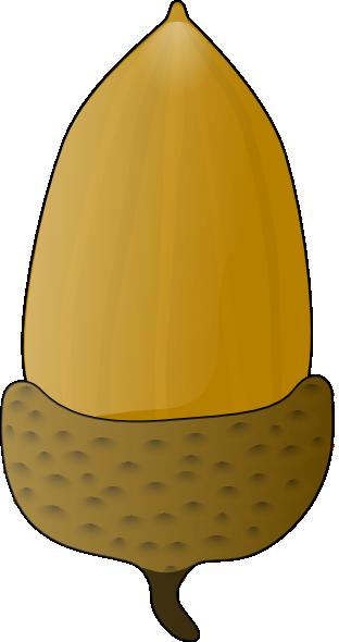 acorn clipart acron