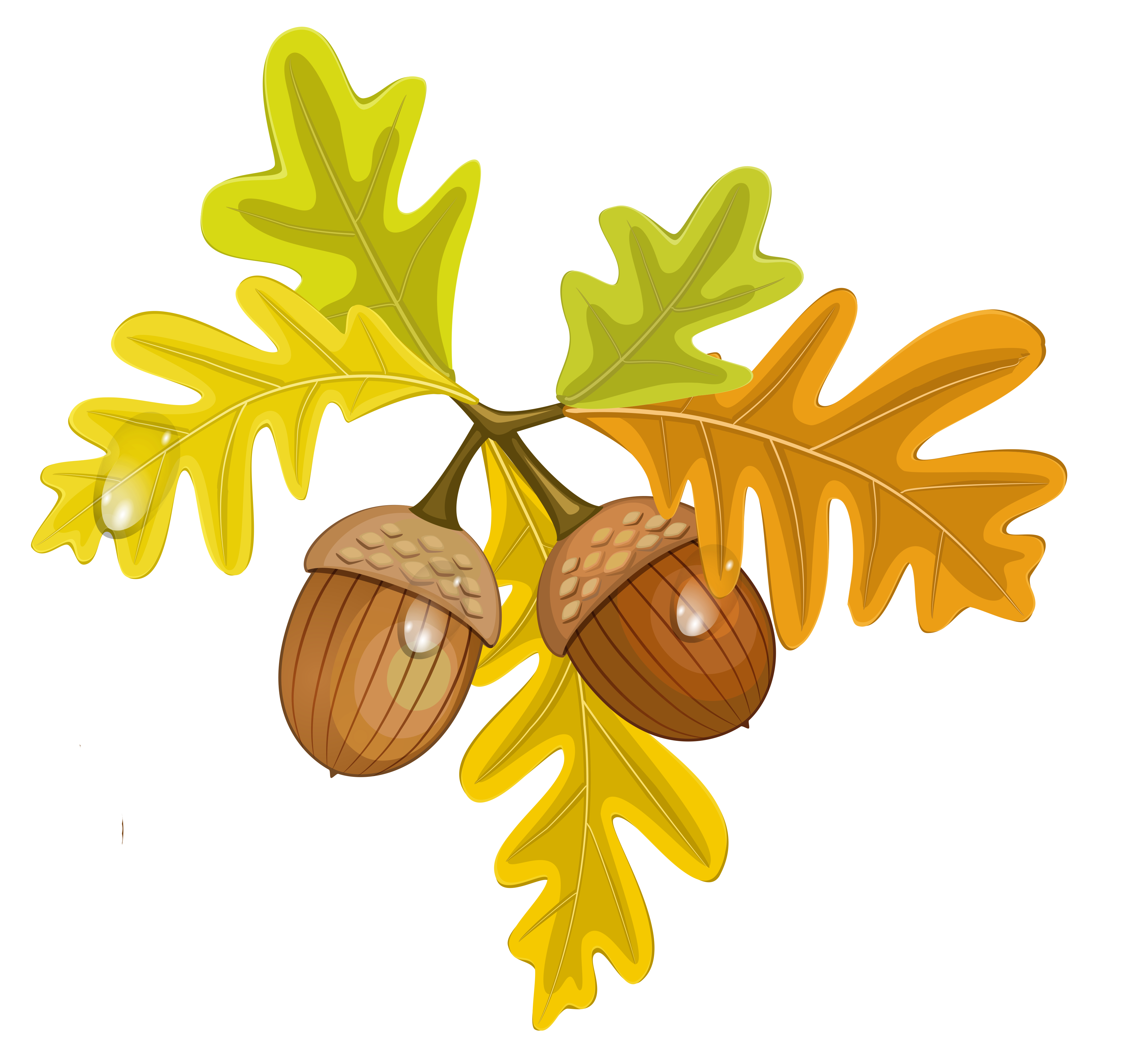 Transparent fall leaves with. Nuts clipart border