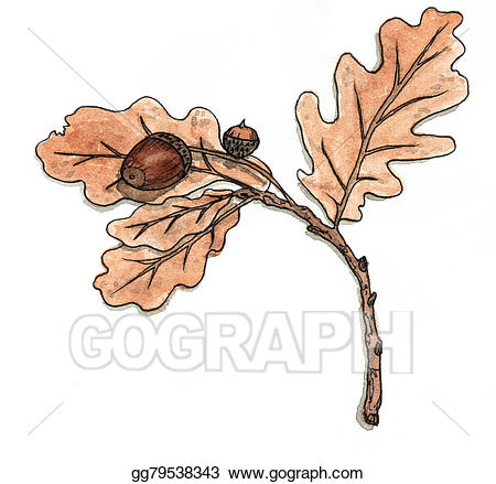Acorn clipart branch. Stock illustrations oak with
