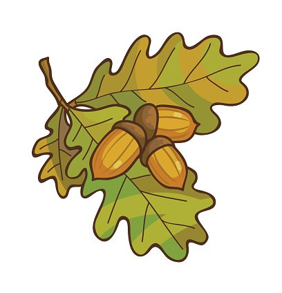 Acorn clipart branch. On oak with premium