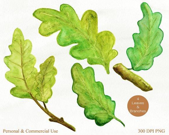 Acorn clipart branch. Autumn watercolor graphics illustrations