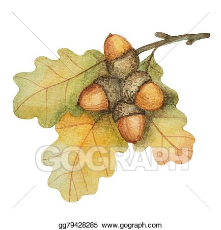 Vector art watercolor oak. Acorn clipart branch