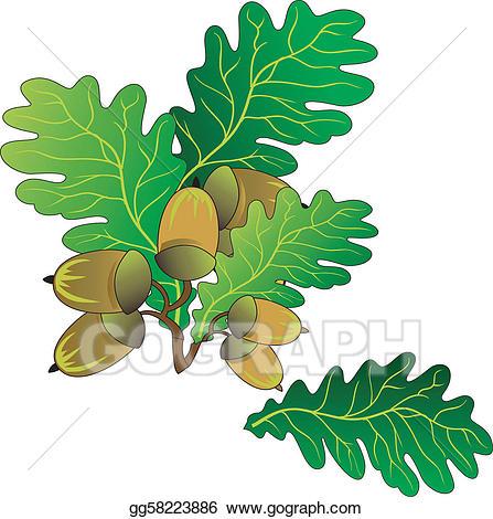 Acorn clipart branch. Vector art oak acorns