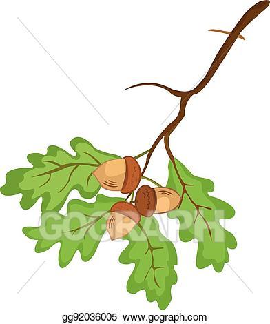 Acorn clipart branch. Vector art eps gg