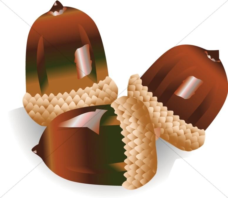 Three shiny acorns nature. Acorn clipart church