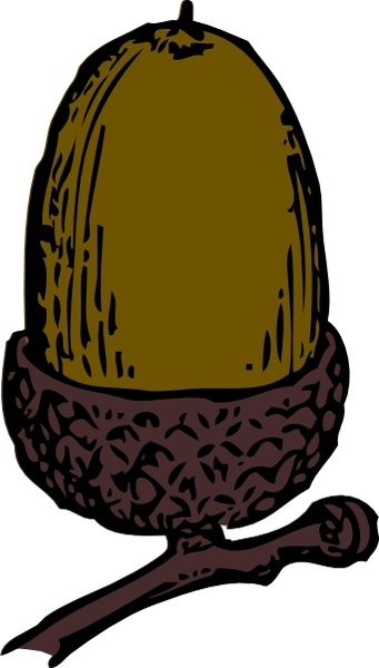Acorn drawn