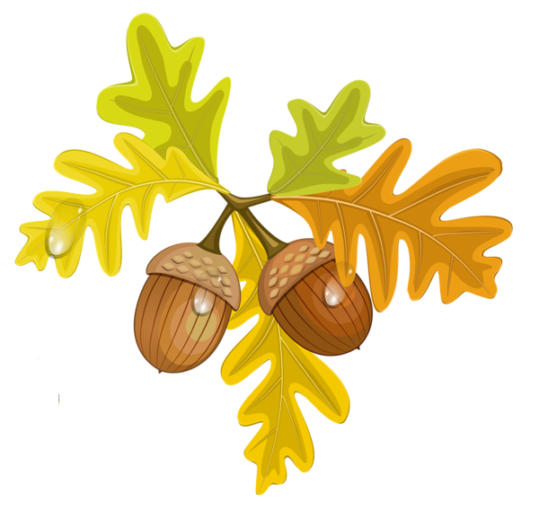 Clipart halloween leaves. Transparent fall with acorns